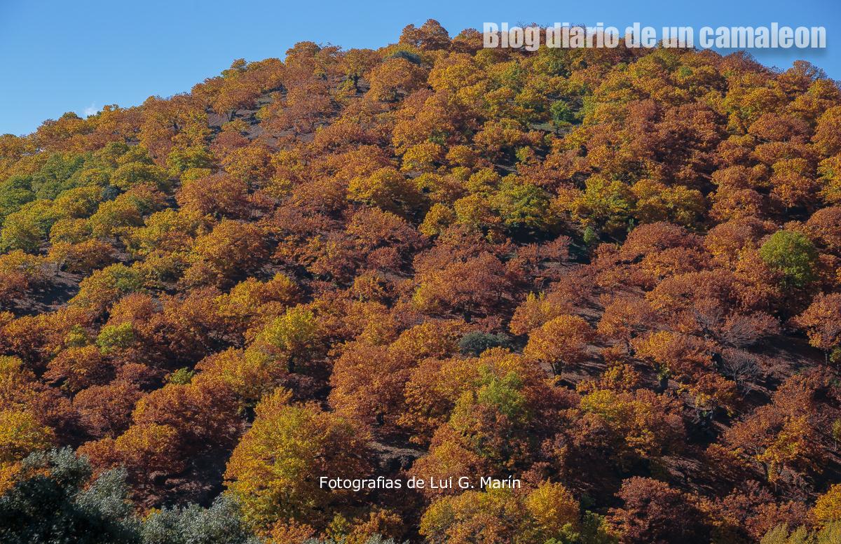 Paseo por el valle de cobre, Igualeja