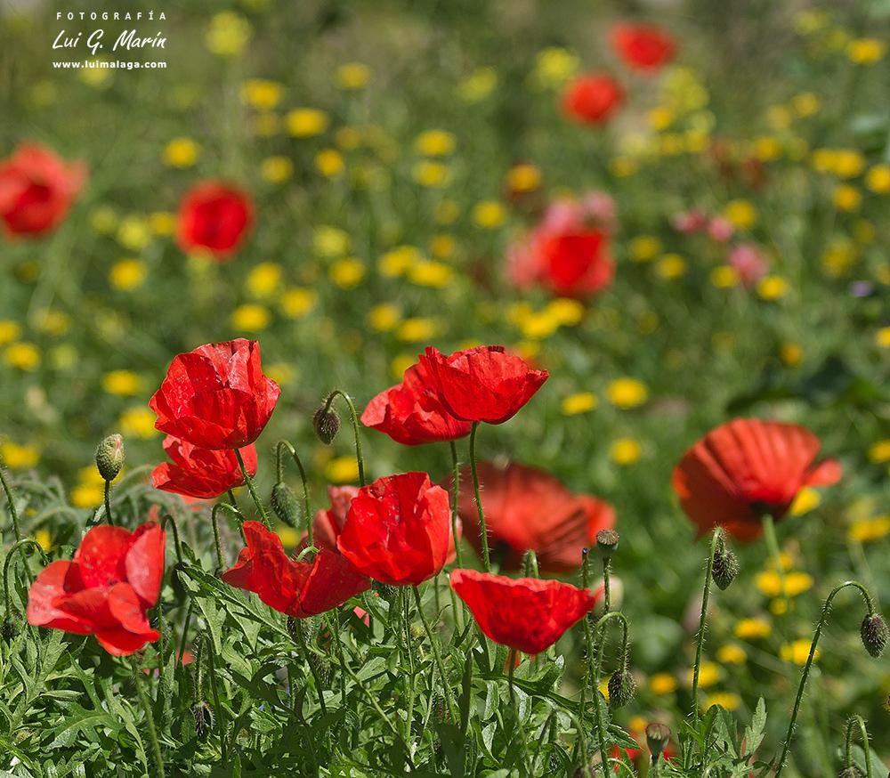 Paseo florido en el Chorro – Álora
