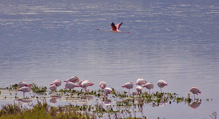 Laguna de Fuente de Piedra y su entorno