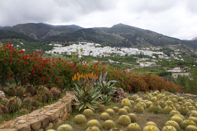 El jardín botánico de cactus de Casarabonela