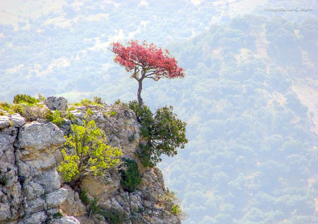 Historia de un árbol rojo